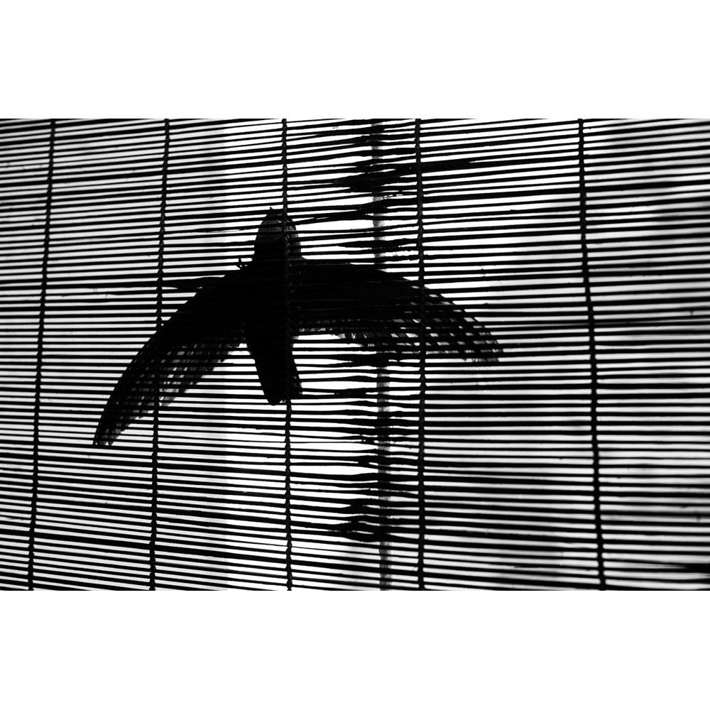 RAPHAEL HUBER - HANGINGBIRD