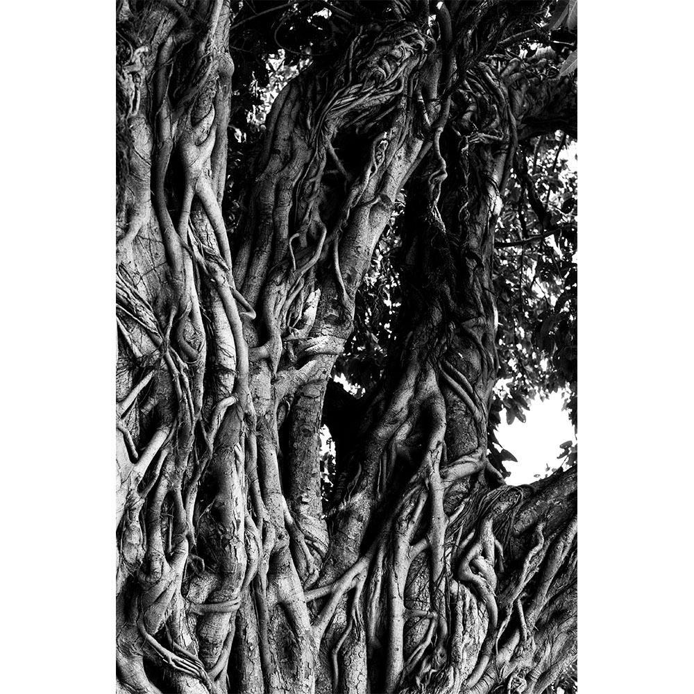 RAPHAEL HUBER - TREE